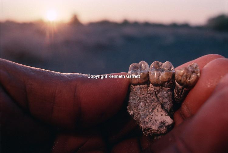 Human Evolution; Meave Leakey; Allia Bay; Kenya; a. Afarensis; Fossil; Teeth