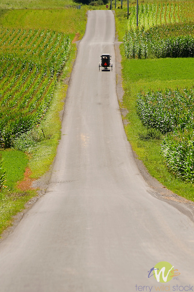 Amish buggy on country road. Sugar Valley, Clinton County, PA.