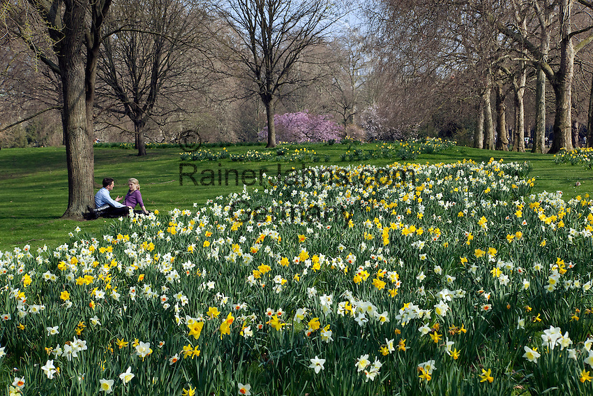 Great Britain, England, London: Young couple sitting by Spring Daffodils in Saint James` Park