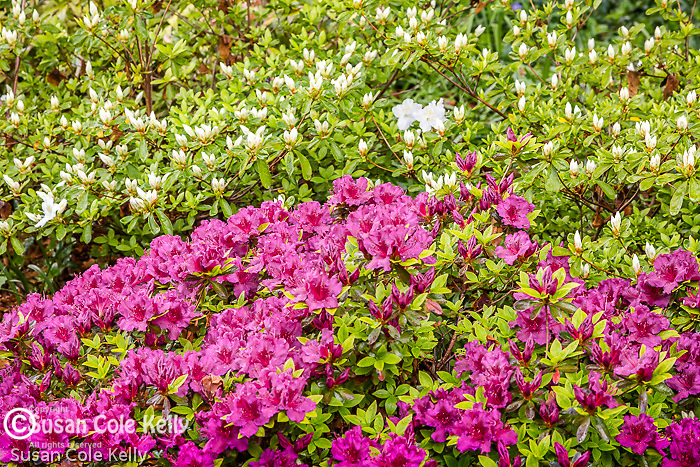 Mini garden in the Back Bay neighborhood, Boston, Massachusetts, USA