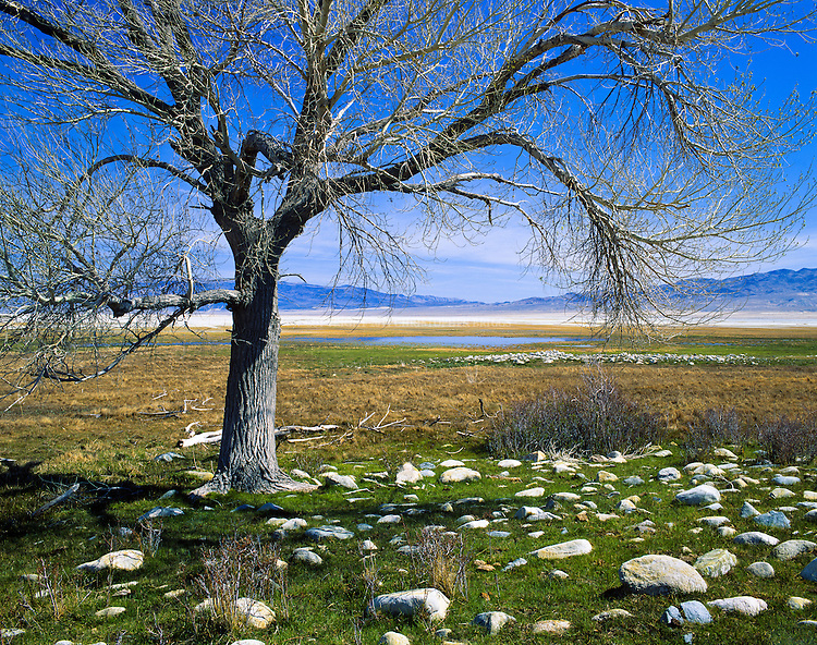 Owens Lake in the Owens Valley. Lake inflows diverted to Los Angeles via aqueduct in early 1900's largely responsible for lake going largely dry. Lake is currently a large salt flat whose surface is made of a mixture of clay, sand, and a variety of minerals including halite, mirabilite, thenardite, and trona. As part of an air quality mitigation settlement, LADWP is currently shallow flooding 27 square miles (69.9 km2) of the salt pan to help minimize alkali dust storms and further adverse health effects. Inyo County, CA.