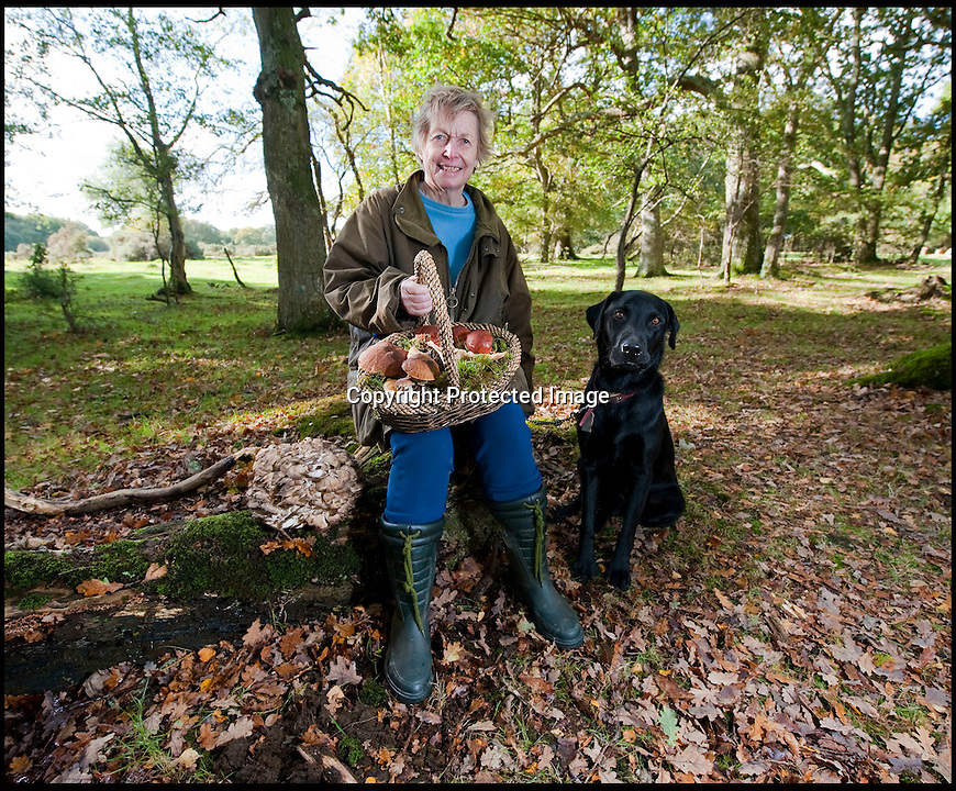 BNPS.co.uk (01202 558833)<br /> Pic: PhilYeomans/BNPS<br /> <br /> If you go down to the woods today...you'll find them carpeted with a bumper crop of wild mushrooms.<br /> <br /> Licensed funghi forager Brigitte Tee with a basket full of mushrooms and her truffle hound Rex.<br /> <br /> Foragers are heralding a vintage year for wild mushrooms after the hot summer and mild autumn brought about a glut of the woodland delicacies.<br /> <br /> The warm weather has produced the best crop of wild mushrooms in eight years, according to experts.<br /> <br /> With temperatures above average for the time of year, forests and fields around the UK have been bursting with the much sought-after fungi.<br /> <br /> It is a stark comparison to last year when heavy rain and cold temperatures in autumn and winter all but wiped out the country's wild mushrooms.<br /> <br /> Brigitte Tee, the only person to have a licence to pick mushrooms commercially in the New Forest, described this year's mushroom season as &quot;phenomenal&quot;.