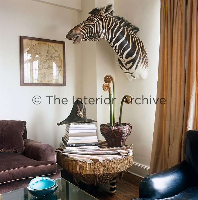A large zebra head takes pride of place on a wall of Todd and Lauren Merrill's Manhattan apartment which is designed in an eclectic mix of intriguing objects and furniture