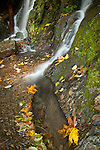 Washington, Mt. Baker National Park, Bellingham. The base of a falls in the North Cascade mountains cascades over moss covered rocks amongst fallen maple leaves in autumn.