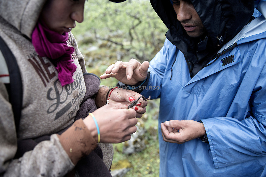 Chophel Zangmo , 30, divorced , she takes care of her three year old daughter with cordyceps. The women of the mountains , once despised by the urban inhabitants of the valleys , are now much courted by men because only the peoples of the high-altitude villages that the government grants the valuable license that allows the collection of mushrooms. Jhomolhari, Bhutan, JJune 2016