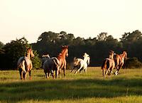 Herd of horses running away...