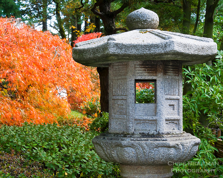 Kasuga (Stag) Stone Lantern with Japanese maple in Fall colors in Portland Japanese Garden