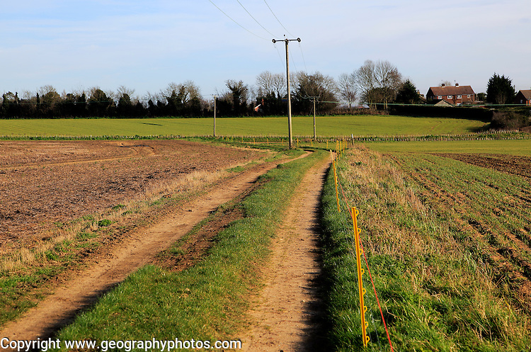 Telegraph poles carrying electricity power cables and pathway through fields Alderton, Suffolk, England, UK