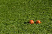 Schenectady, NY. 2 pumpkins in a row outside on the grass. Photos also available of 0, 1, 3, 4, and 5 pumpkins in the same position so can be used for math counting specs. ID: AK-ICP. © Ellen B. Senisi