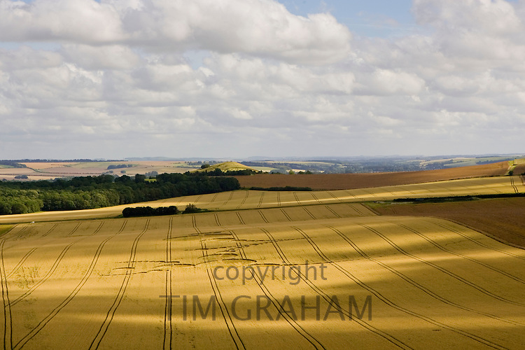 Crop circle in the Vale of Pewsey, Wiltshire, England, United Kingdom