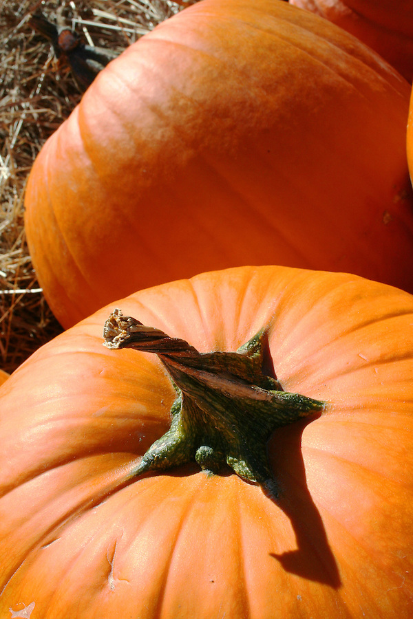 Orange pumpkin with twisted stem