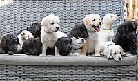 Rescue pup has surprise litter of 12