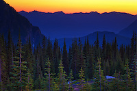 A view of Paradise. This popular area of Mount Rainier toward the top of the tree line has extraordinary views of the surrounding ridges and mountains, especially at sunset!