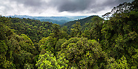 Choco Rainforest, Ecuador. This area of jungle is the Mashpi Cloud Forest in the Pichincha Province of Ecuador, South America