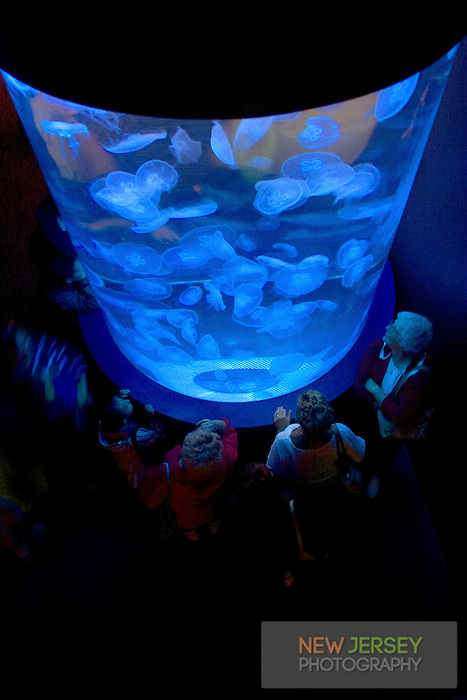 People observing an aquarium containing moon jellyfish, Adventure Aquarium, Camden Waterfront,  New Jersey