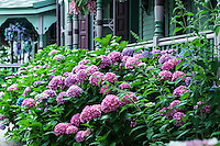 Victorian house and gardens, Cape May, NJ, USA