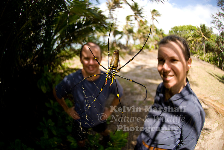 The golden silk orb-weavers (genus Nephila) are a genus of spiders noted for the impressive webs they weave. Nephila consists of numerous individual species found around the world. They are also commonly called golden orb-weavers.The name of the golden silk orb-weavers refers to the color of the spider silk, not the color of the spider itself.