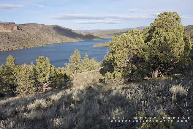 Bunchgrass and juniper above the Prineville Reservoir, Oregon.