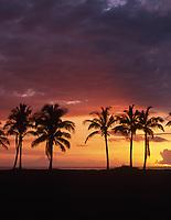 Coconut Palm Trees at Sunset, Maili Beach Park, Waianae, Oahu, Hawaii, USA.