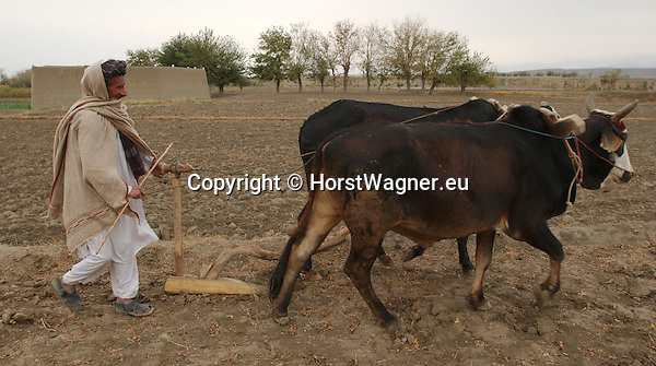 Afghanistan, Nangarhar Province (Jalalabad), Dih Bala District; November 11, 2002 -- Project region of Welthungerhilfe; man / farmer with two oxen ploughs the field; animal, agriculture, people, rural -- Photo: © HorstWagner.eu