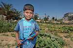 Mu'az Abudagga, 6, waters his family's small farm with water collected in a rainwater harvesting system his father installed at their home in Al Fukari, Gaza. The family had built a system before, but Israeli air strikes in 2014 destroyed that system and damaged the family's house. With help from Diakonie Katastrophenhilfe, a member of the ACT Alliance, they rebuilt the water system and have repaired some of the damage to their home. In the wake of the devastating 2014 war, ACT Alliance members are supporting health care, vocational training, rehabilitation of housing and water systems, psycho-social care, and other humanitarian actions throughout the besieged Palestinian territory.<br /> <br /> Parental consent obtained.
