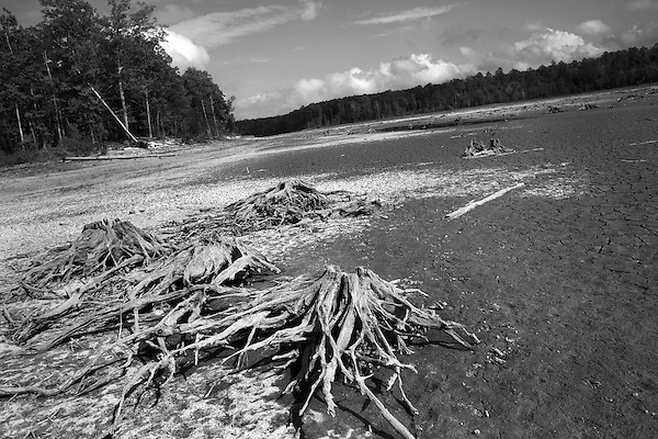 October 18, 2007, Wake County, NC.. Previously submerged stumps now litter the former lake bottom.. Images from Falls Lake, the main water source for Wake County, NC, which includes the capitol city of Raleigh.. As the seriousness of the drought in the southeastern US continues to grow, Wake County has instigated mandatory water restrictions to help sustain their shrinking water supply.
