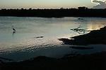 Yala National Park Sri Lanka<br /> Indian Pond Heron, Grey Heron and Crocodile