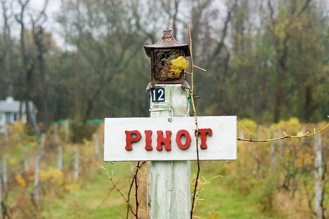 Sign in vineyard of Cape Cod Winery describes grapes planted here