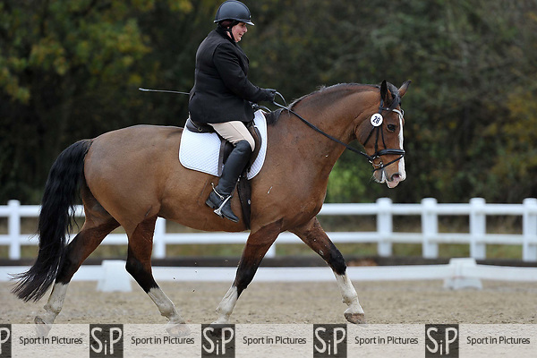Class 4. Novice 39. British Dressage. Brook Farm training centre. Essex. UK. 11/11/2017. ~ MANDATORY CREDIT Garry Bowden/Sport in Pictures - NO UNAUTHORISED USE - +44 7837 394578