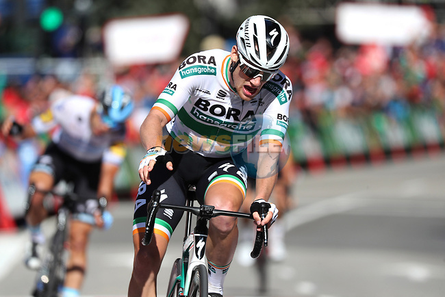 Sam Bennett (IRL) Bora-Hansgrohe wins Stage 14 of La Vuelta 2019 running 188km from San Vicente de la Barquera to Oviedo, Spain. 7th September 2019.<br /> Picture: Luis Angel Gomez/BettiniPhoto | Cyclefile<br /> <br /> All photos usage must carry mandatory copyright credit (© Cyclefile | Luis Angel Gomez/BettiniPhoto)