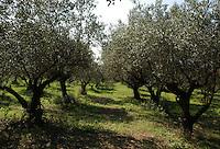 Azienda Agricola Casale Marchese è una azienda in una delle zone più tipiche della produzione del vino Frascati D.O.C. Situata nell'area dei Castelli Romani..The Casale Marchese company lies in Roman Hills. The most typical area for the wine production Frascati D.O.C..