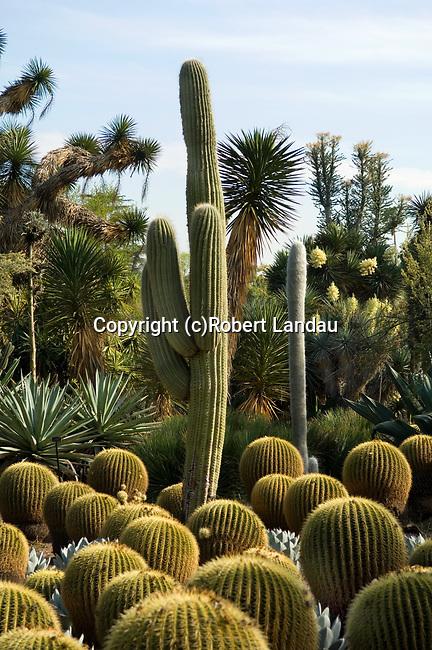 Cactus Garden at Huntington Gardens in Pasadena