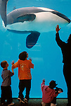 Sea World Adventure Park Shamu underwater viewing with kids looking at killer whale San Diego California USA