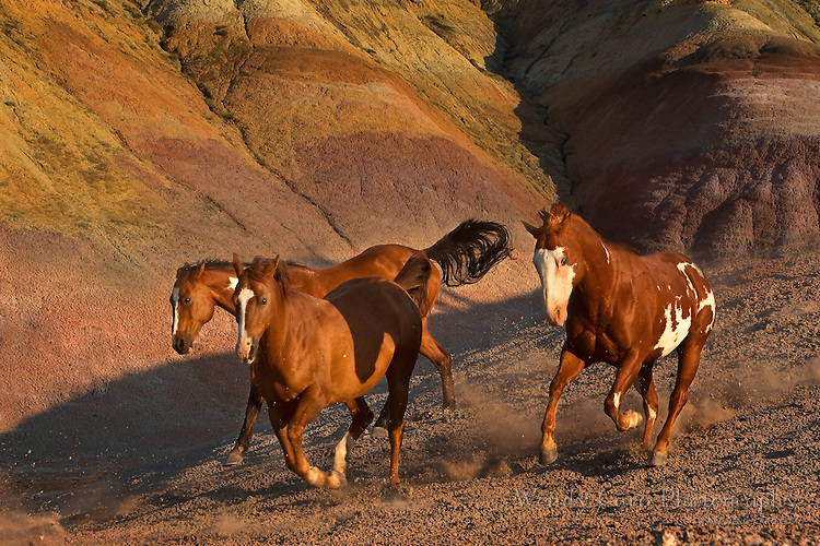 Three mustangs galloping amidst the painted rocks, Big Horn Mountains, Wyoming.