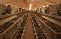 Poultry. Battery cages.