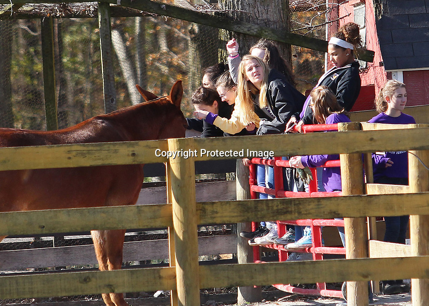 Students with Jenny Greene and Kelly Ann Janssen watch a donkey and horses before leaving Agape Therapeutic Horseback Riding near Cicero.