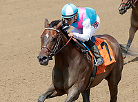 Satisfy (no. 7), ridden by Junior Alvarado and trained by William Mott, wins Race 4 July 28 at Saratoga Racecource, Saratoga Springs, NY.  (Bruce Dudek/Eclipse Sportswire)