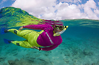 A half over half below scene of a female snorkeler (MR) free diving off the island of Bonaire, the Netherlands Antilles, Caribbean.