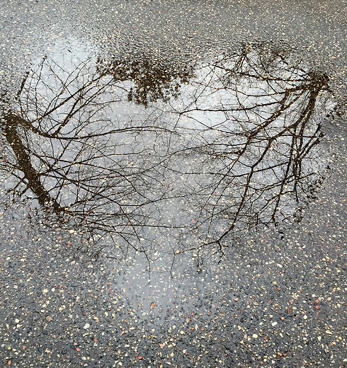 Love for Life.....While walking at the MN Landscape Arboretum on a rainy day I came across a heart shaped puddle. As I looked closer there appeared the reflection of the trees. I love life's reminder of the Connection that we all share. Love!