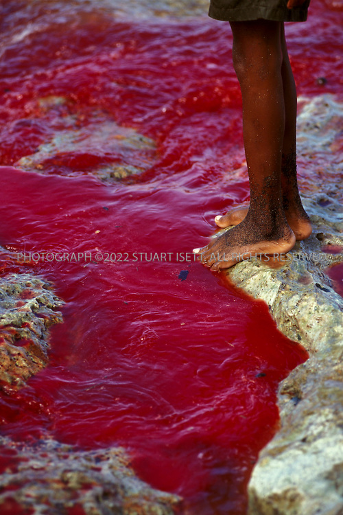 Lamalera, Indonesia..Blood flows out to the sea as a sperm whale is butchered on the beach at Lamalera...Photograph by Stuart Isett.©2003 Stuart Isett