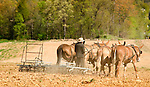 Nippenose Valley. Levi Stolfus plowing with four horse team.