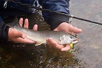 Wrangell, Alaska stream fishing for Cutthroat, Dolly Varden, Chum salmon, Pink salmon. A Dolly Varden Char caught on spinning tackle.
