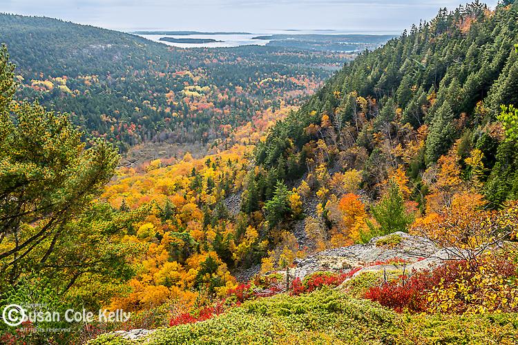 Fall foliage on Beech Mountain in Acadia National Park, Maine, USA