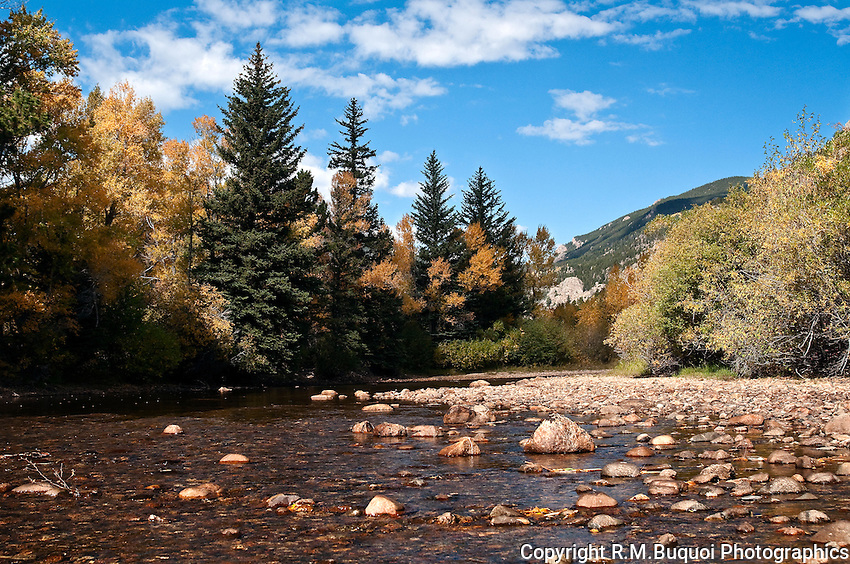 Cottonwood and Spruce Trees alongside a riverbed