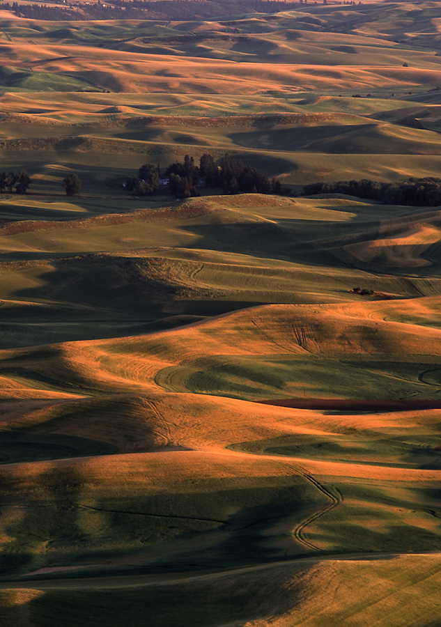 The warm light near sunset illuminates the hills of the Palouse in mid-July.