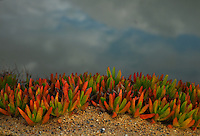"""TERRARIUM""<br />