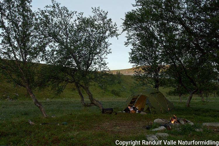 Teltleir blant bjørker. ---- Tent among white birch.