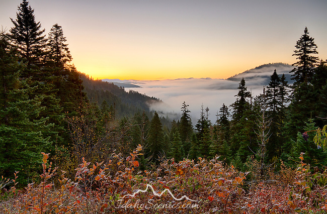 Idaho, North, Idaho Panhandle National Forest, Athol. Fog lies in the timbered valleys at dawn in the Kaniksu District of the Idaho Panhandle National Forest.