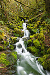 Small stream, Silver Falls State Park, Oregon