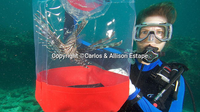 Lionfish, Invasive species, Islamorada, Florida
